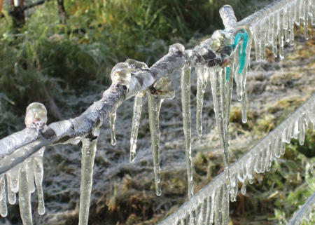 The counterintuitive tactic of encasing delicate grapevine buds in ice to protect them from freezing has led to heightened competition for water in recent drought years.