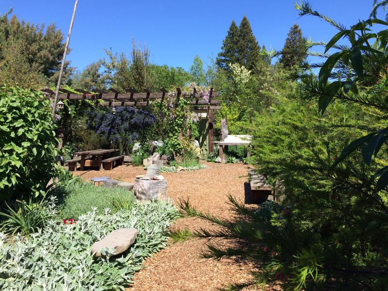 Kate Frey's garden is filled with blooming plants almost year round.