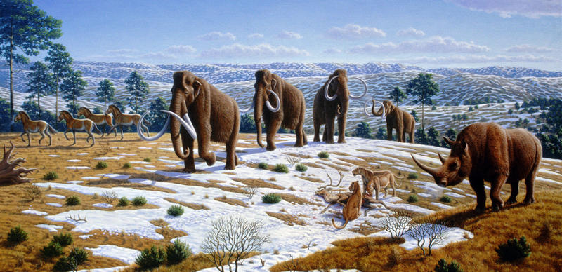 Megafuana, such as mammoths and the large cats and wolves that preyed on them, were numerous in what is now northern California during the last Ice Age. They were a major food source for the native people of that era.