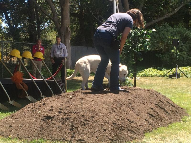 The yellow lab Sparks rings in the ceremony with a dig.