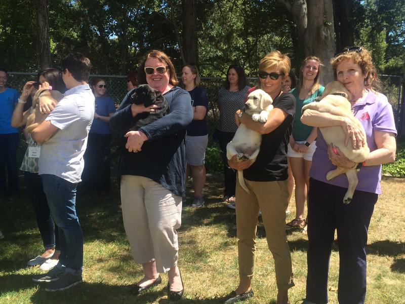 "Over a dozen puppies were handed off to live with volunteer host families to get more ""real life"" training."