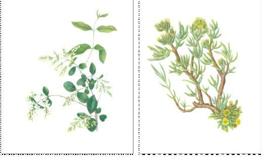 Plant portraits such as these, by Sonoma County artists Nina Antz (left) and Elizabeth Peyton (right) are featured in the current exhibition at the  Marin Art and Garden Center.