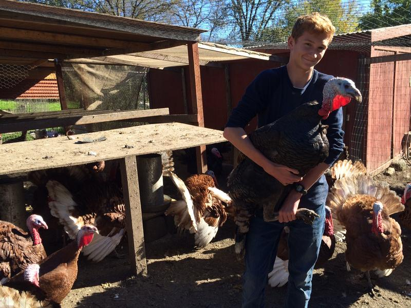 14-year-old Andrew Thurber began raising turkeys three years ago.