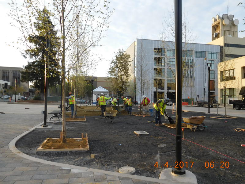 Crews planted several London Plain trees on the plaza earlier this month.