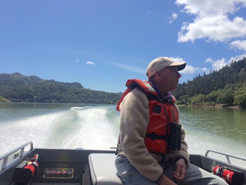 U.S Army Corps of Engineers ecologist Wade Eakle scans the shoreline of Lake Sonoma for signs of eagle, falcon and osprey nests.