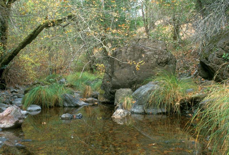 San Anselmo Creek