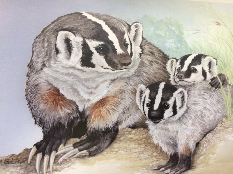 An American Badger mom and two of her young.