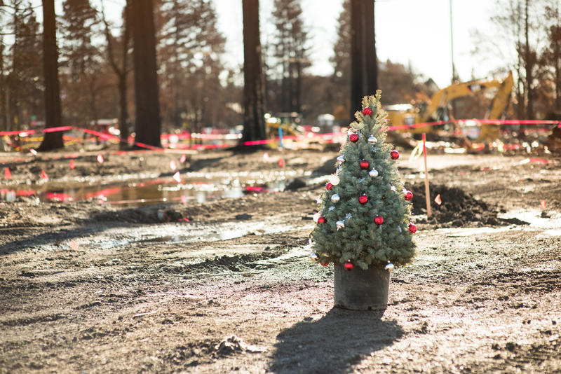 Christmas tree in Santa Rosa after recent fires