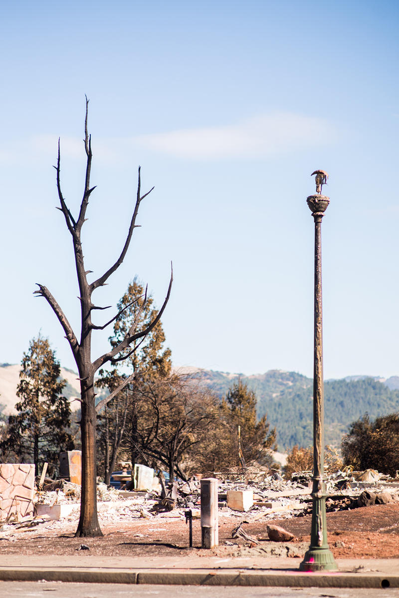 Lamp post and tree after North Bay fires