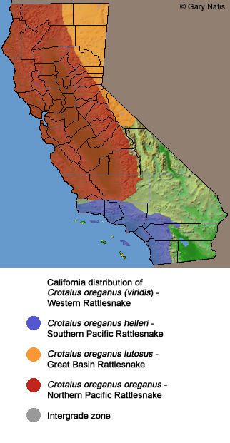 Rattlesnakes In Colorado Map.Living With Rattlesnakes In Sonoma County Krcb