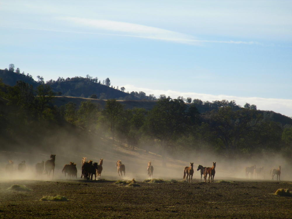 Wild horses find peace and protection in northern for Sanctuary ranch
