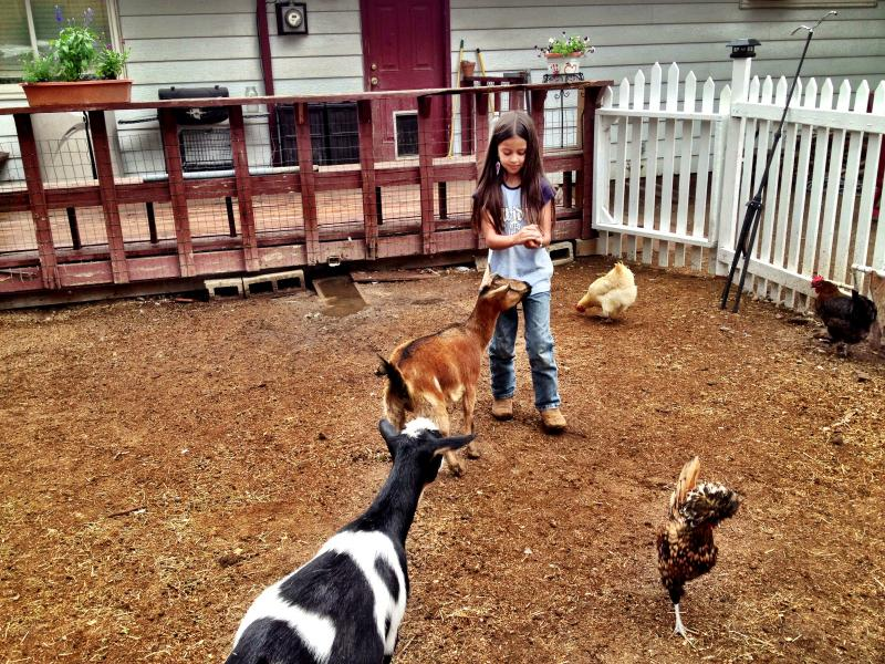8-year-old Isabella with urban farm animals