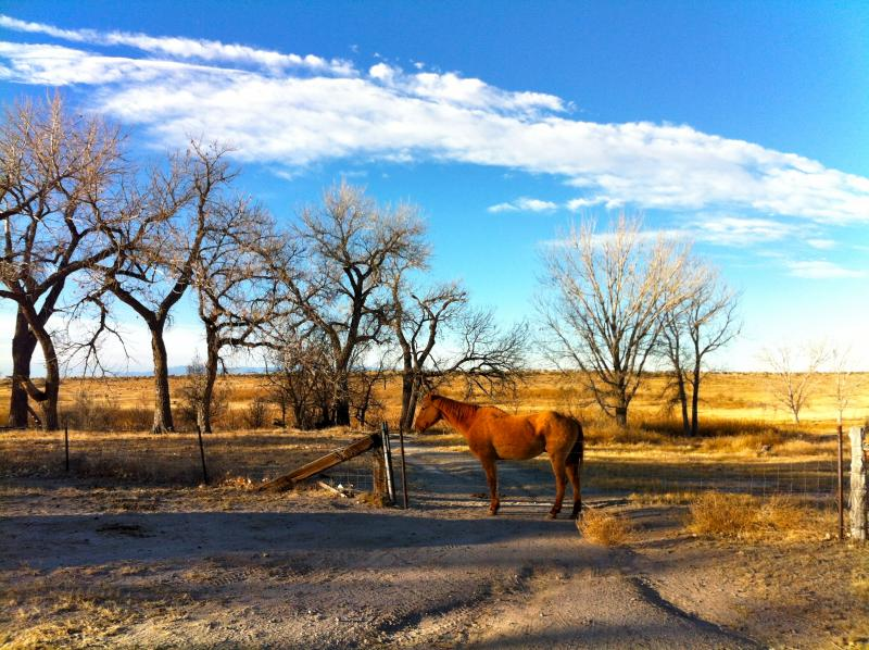 A horse basks in one of Chico's many pastures