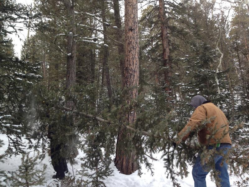 Joe Gurzi hauls the tree to the truck