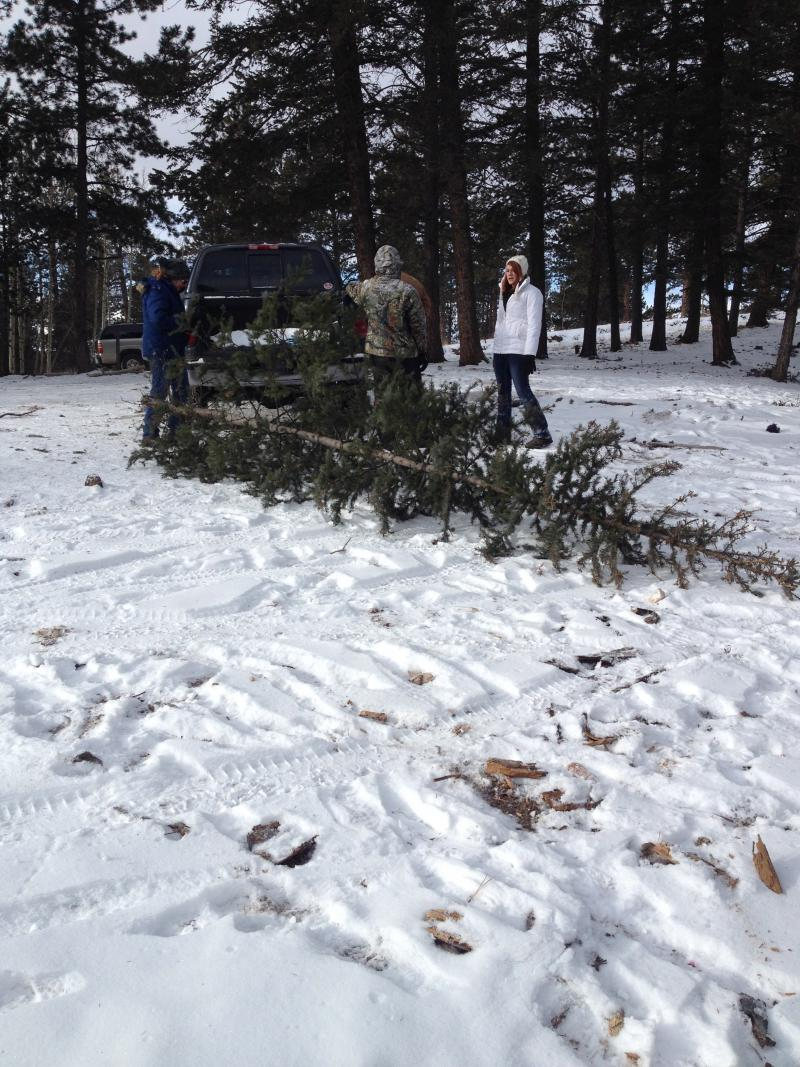 The Gurzis load the tree into the truck bed