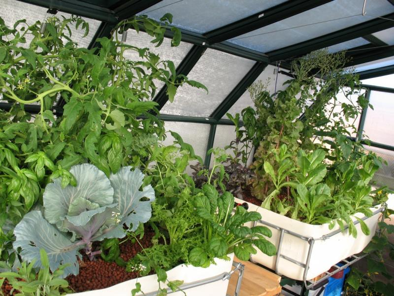 Plants in Christine Faith's aquaponics system