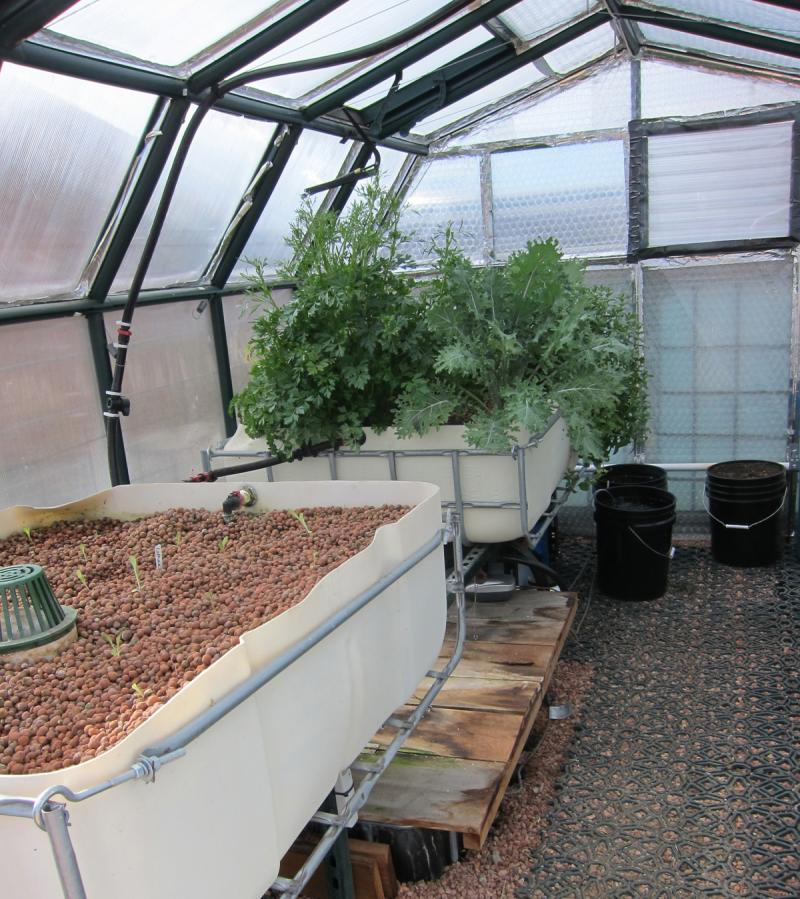Lettuce starts and mature leafy greens flourish in the grow beds of Christine Faith's aquaponics system. Koi live in the tank under the beds.