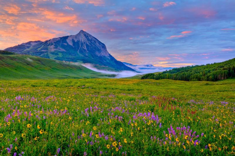 Field of Wildflowers Crested Butte Area