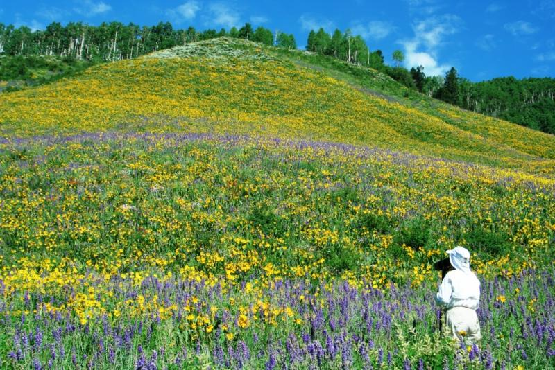 Photographing Flower Laden Hill in Crested Butte