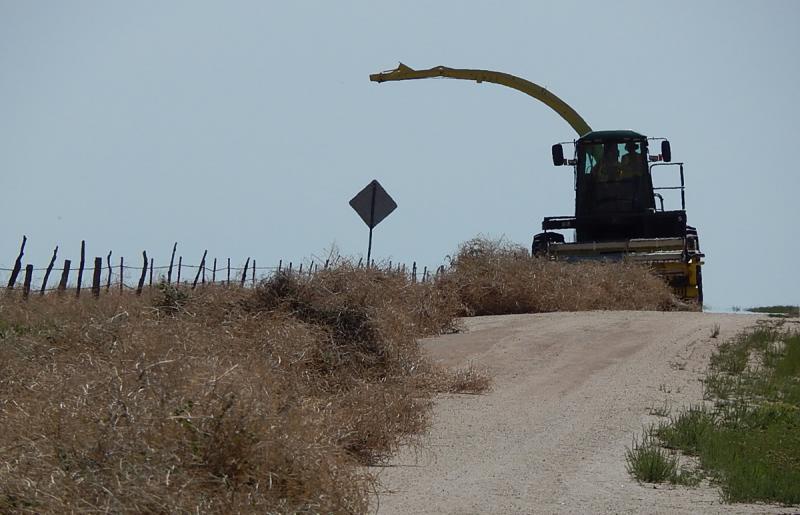 The Tumbleweed Eater Prepares to mulch a line of tumbleweed.