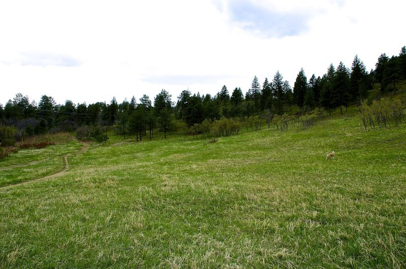 Looking South from the meadow up toward Old Stage road, which lies beyond the trees.