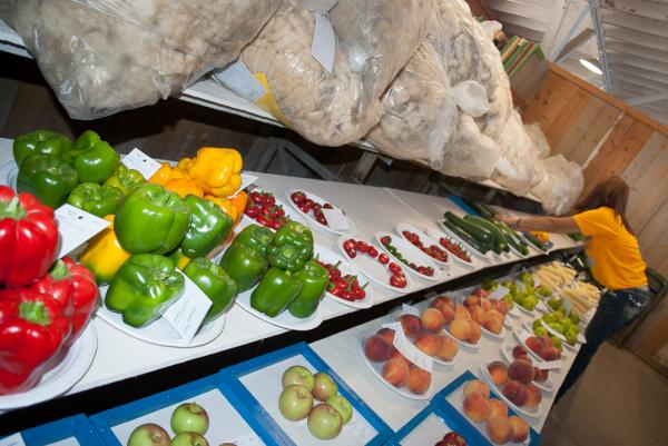 Vegetables are prepped for judging at the Colorado State Fair.