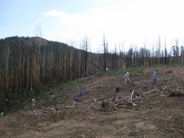 Volunteers in the Northfield Watershed on Rampart Range work on seeding.