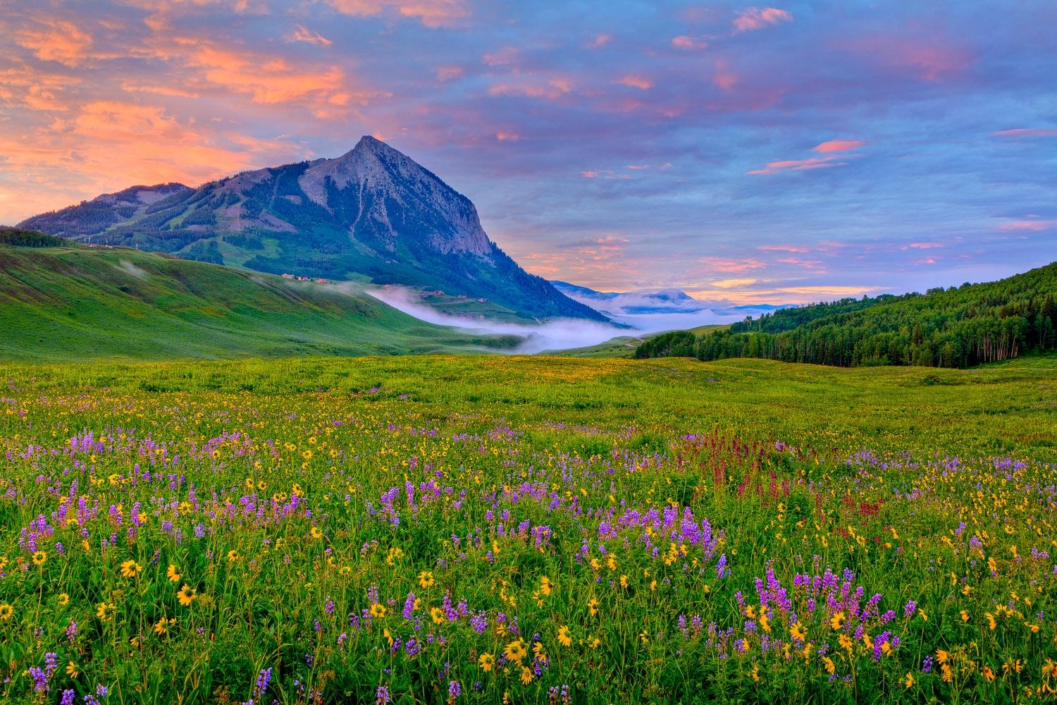 Crested butte wild about flowers krcc field of wildflowers crested butte area dhlflorist Choice Image