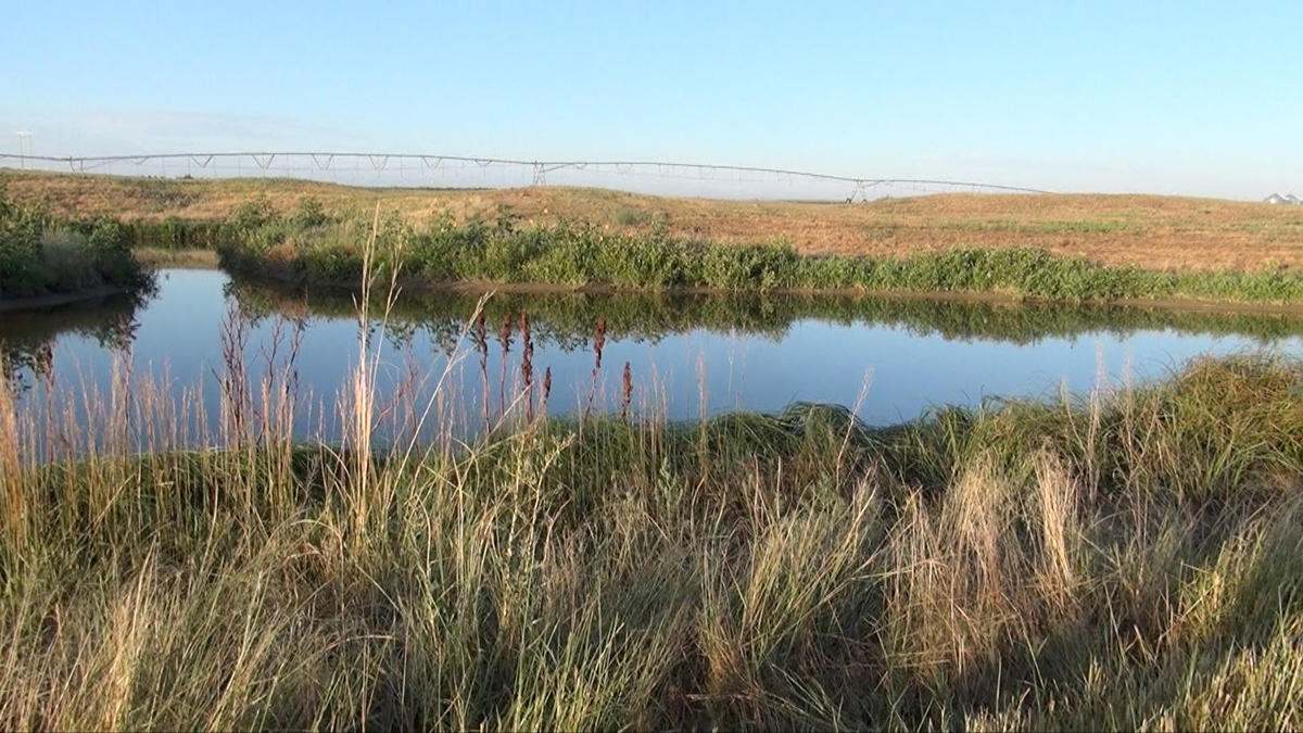 winter water for migrating ducks krcc