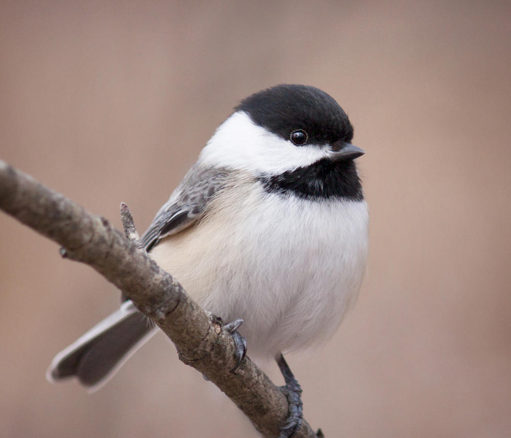 florissant fossil beds goes to the birds for the great backyard