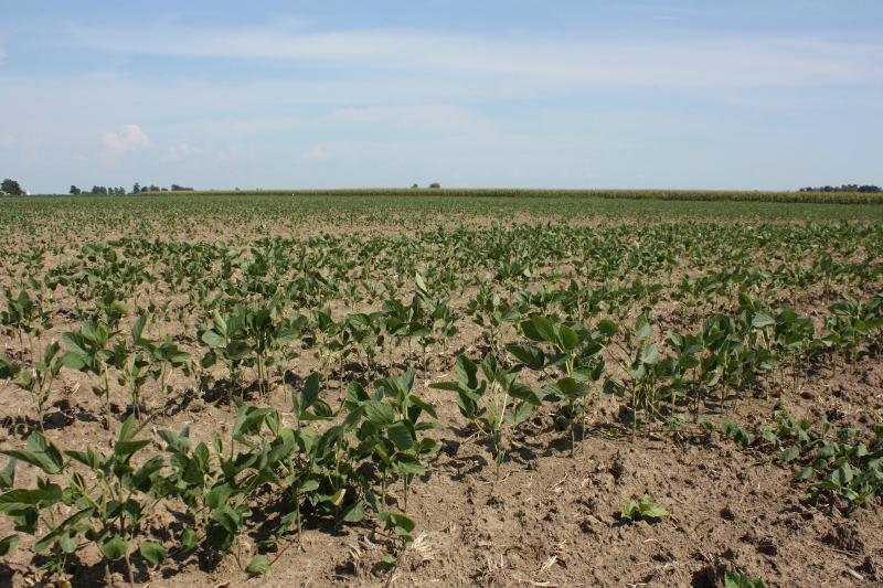 The nationwide drought devastated corn and soybean crops. But lack of supply led to high corn and soybean prices.