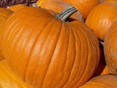 Pumpkins are often considered a drought resilient crop, but the combination of extreme heat and low rainfall have taken their toll on Missouri pumpkins.