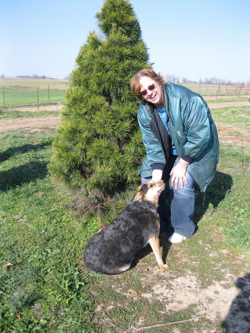 Teresa Meier raises Christmas trees at Horseshoe Pines in Jackson, Missouri.