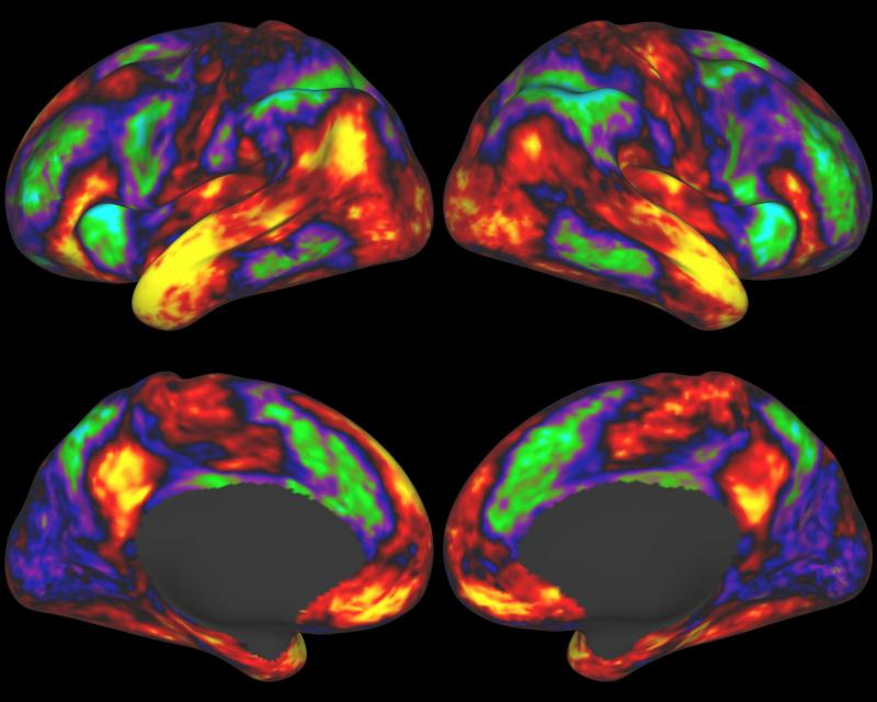 A map of brain regions associated with language processing in the human cerebral cortex. Yellow and red regions are activated by listening to stories, whereas green and blue regions are more strongly activated by doing mathematical calculations.