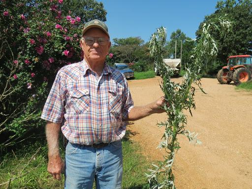 Don Proffitt, Pottersville, holds a tall thistle he removed from his farm.