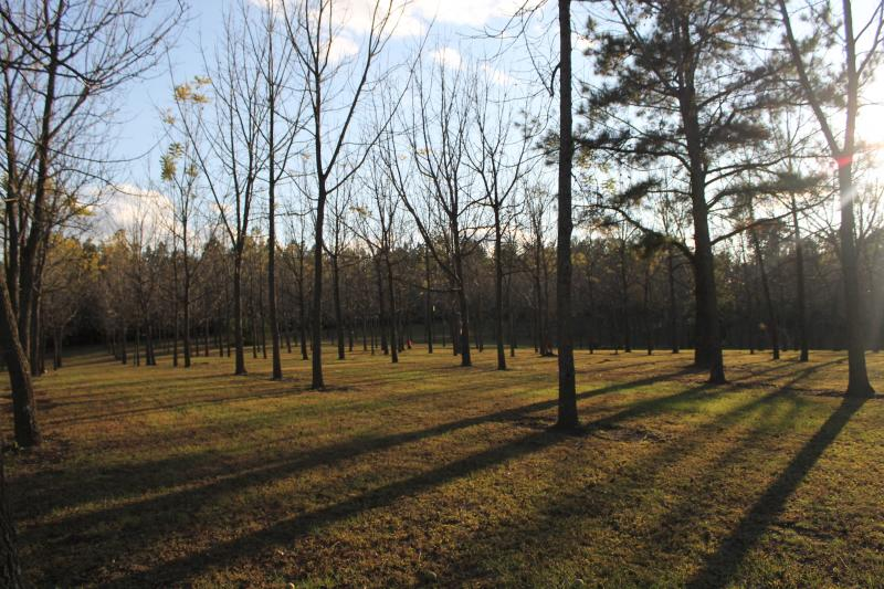 The Martin Tree Farm is a 288 acre walnut farm near Cape Girardeau, Mo.