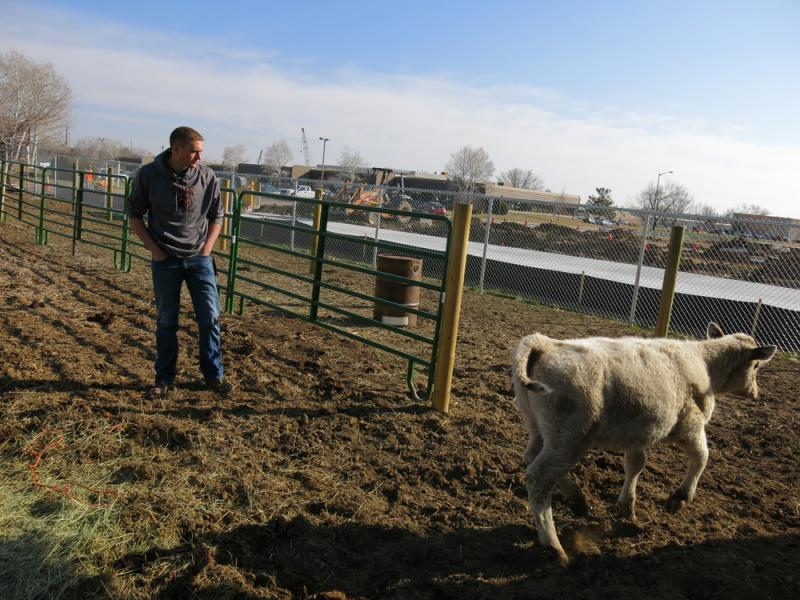 """We're in an urban area, so most of our members do not grow up on property, though they still have that connection to agriculture,"" said Reece Melton, 18, president of the St. Vrain Valley FFA chapter."
