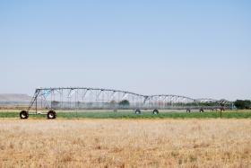 Treated water is distributed throughout the fields using a sprinkler system. There are a 18- and 30-acre sprinklers in addition to a 35-acre pivot already in place. (NMSU photo by Angela Simental)