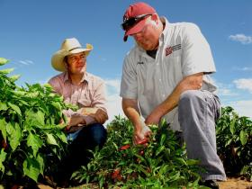 Chuck Havlik, NMSU graduate student, describes the unique traits of landrace chiles to Noble Brooks Reed, left. Havlik is working with Stephanie Walker, NMSU Extension vegetable specialist, to establish a consumer guide that will categorize and describe the various traits of the heritage landrace chiles. (NMSU photo by Jane Moorman)