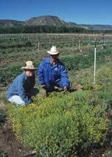 New Mexico Farmers and Ranchers