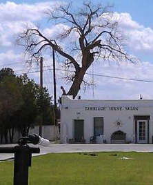 The large cottonwood that was being removed when a swarm of bees attacked three men stands behind the Carriage House Salon on the southwest corner of The Alameda House property in downtown Las Cruces. Courtesy: Las Cruces Fire Department