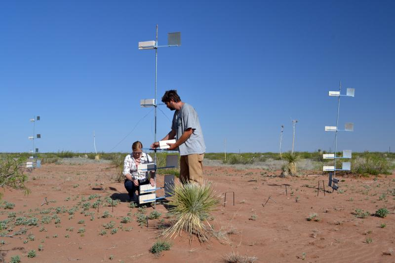 Roxanne Chepsongol and Jameson Brennan, Department of Biology research assistants, conduct dust collections on vegetation removal plots in a study of how wind transports soil and nutrients.