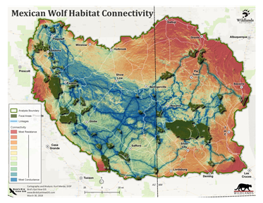 Importance of Gila National Forest For Mexican Wolf Recovery | KRWG