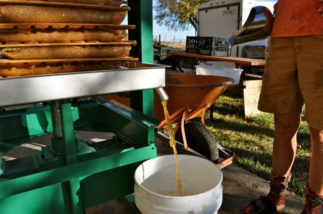 Cider pouring from the press
