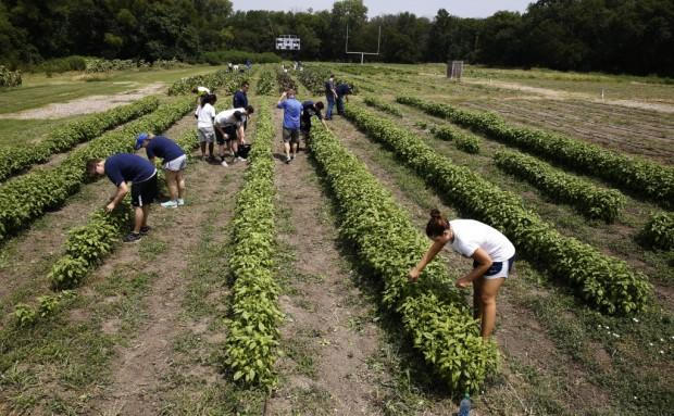 Students at Paul Quinn College at the football field farm.