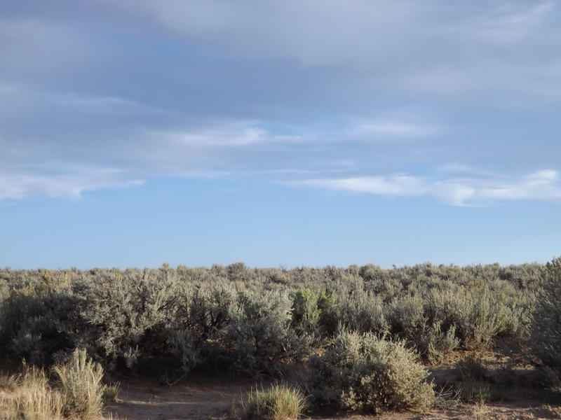 Undeveloped land on the road to Chaco.