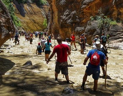 Crowds hike in the Virgin River at Zion National Park