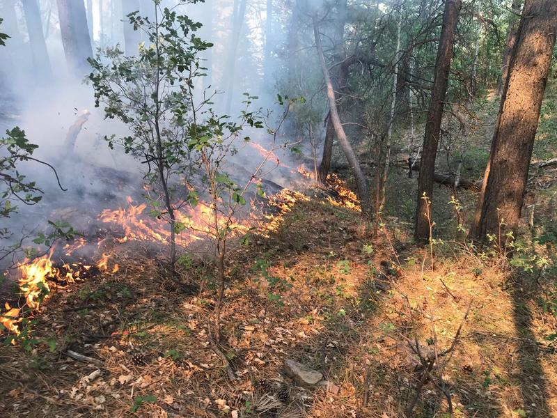 The Plateau Fire was spotted July 22 and is believed to be lightning-caused.