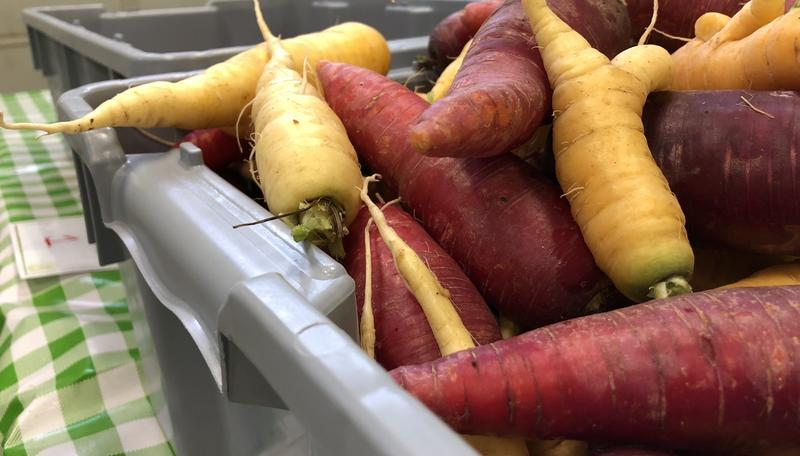 Fresh purple and yellow carrots ready for shareholders at the Southwest Farm Fresh Co-Op.