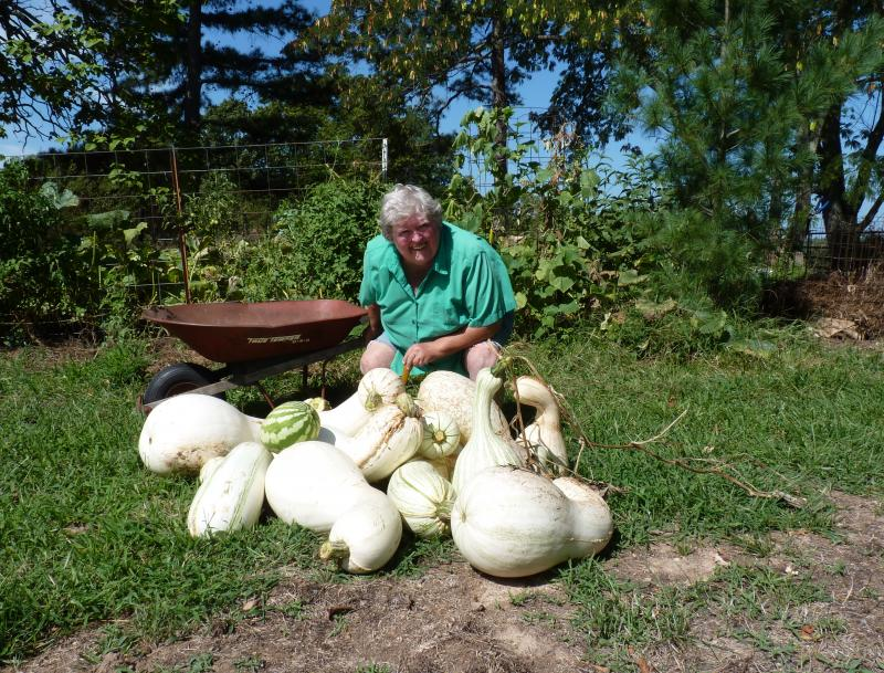 Marideth Sisco of West Plains sits amidst her cushaw harvest this summer. (Photo provided by Marideth Sisco/Sarah Denton)
